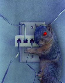 Evil Tech Squirrel
